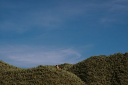 a lone cow on the top of some dunes in kerry ireland Stock Photo - 3007076