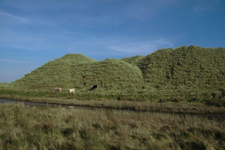 some cows on the top of some dunes in kerry ireland grazing in green pastures Stock Photo - 3007091