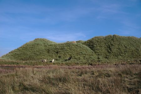 some cows on the top of some dunes in kerry ireland grazing in green pastures Stock Photo - 3007089