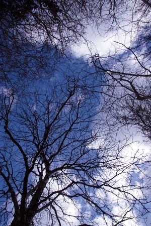 autumnn: a beautiful view of the sky seen through the rustling leaves