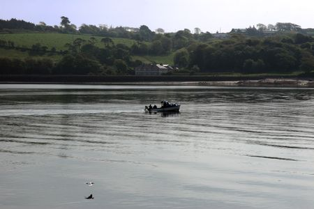 blackwater: people fishing from a boat on the river blackwater in ireland with a seagull flying by