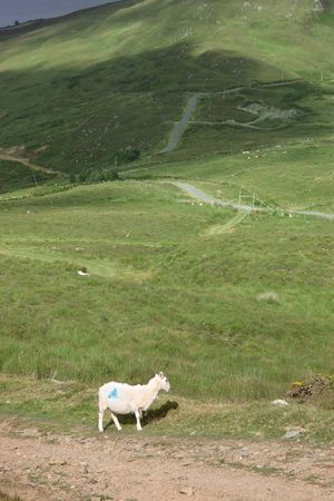 kerry: mountain sheep grazing on a hillside in county Kerry Ireland Stock Photo