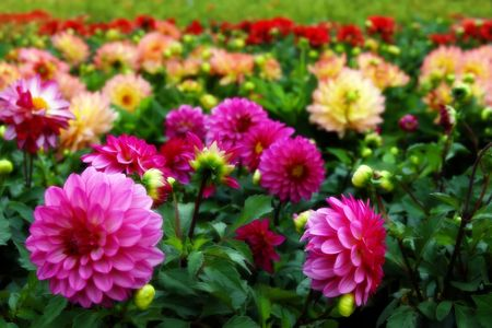 florets: flowers in bloom in the west of ireland Stock Photo