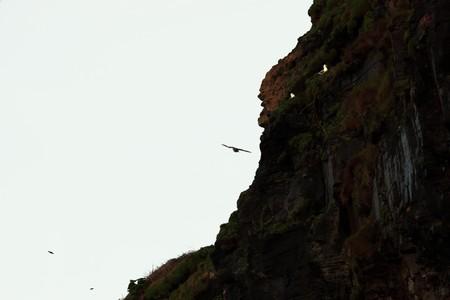 seagulls at ballybunion cliffs on the west coast of ireland Stock Photo - 4286139