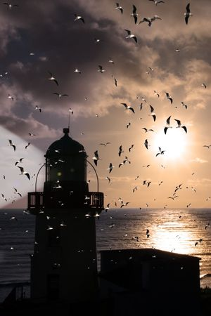 silhoutte of lighthouse captured with the sun behind it and flock of gulls photo
