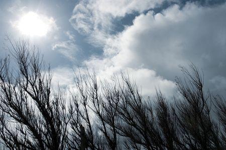 windswept: a windswept row of trees on the coast of ireland