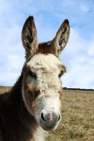 a donkey resting in a field on the west coast of ireland Stock Photo - 5042867