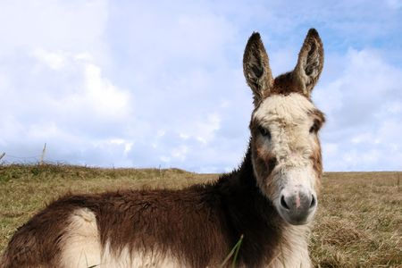 a donkey resting in a field on the west coast of ireland Stock Photo - 5042829