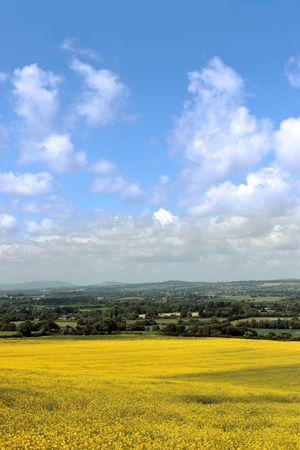 mustard fields in the open irish countryside photo