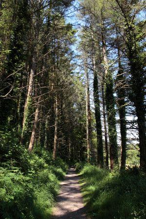 a wild wood with a narrow footpath  photo