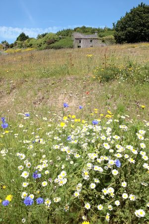 irish countryside: wild flowers on the way to glandore village on the west coast of ireland in summer Stock Photo