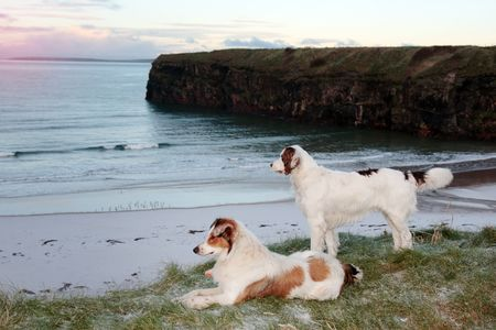 two dogs on the snowy clifftop viewing the sunset in ballybunion county kerry ireland photo