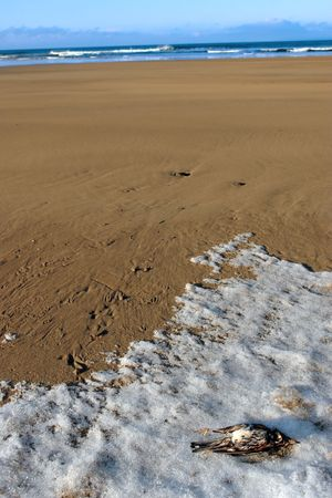 harsh: a dead bird on a beach due to the harsh cold winter