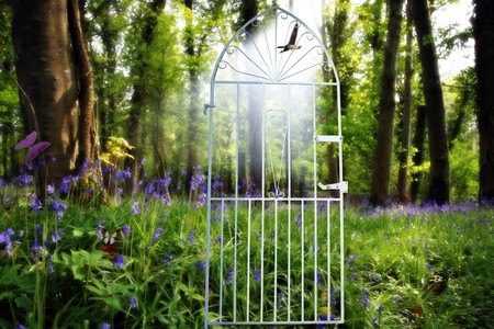 a gateway to a wood full of bluebells butterflys and paradise photo