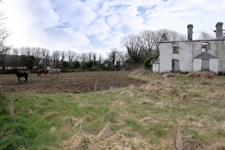 an old abandoned farmhouse with horses in ireland photo