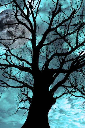 silhouette of an ancient tree on a bright cold moonlit night Stock Photo