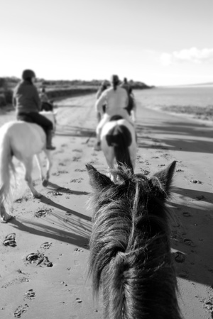 a riders view of a pony ride on a beautiful beach in county kerry ireland in black and white photo