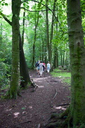 family taking a walk in mature woods in the Cheshire countryside in England photo