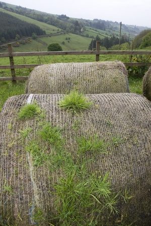 old round bales in lush irish countryside landscape at glenough county tipperary ireland photo