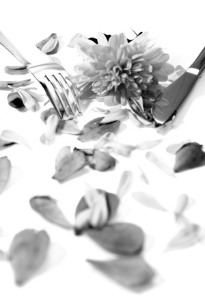 silver fork and knife isolated with dahlia and rose petals for concept on romantic dining in black and white photo