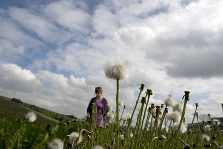 county tipperary: woman walking through wild dandelions in lush irish countryside landscape at glenough county tipperary ireland