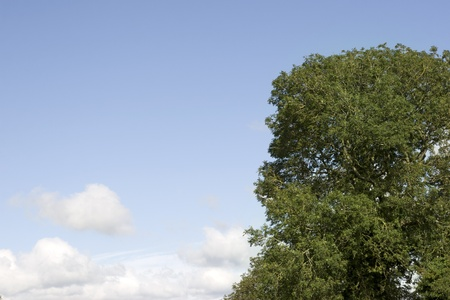 county tipperary: lush tree growing in the wild in glenough county tipperary ireland against blue sky