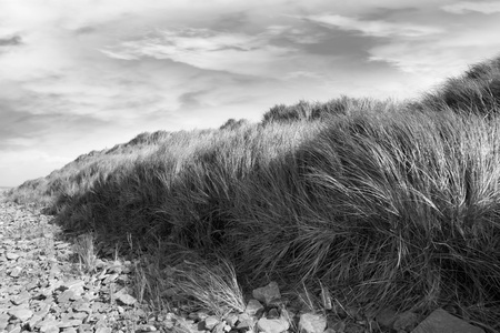 tall dune grass on a rocky beach in county Kerry Ireland gently blowing in the breeze in black and white Stock Photo - 13581715