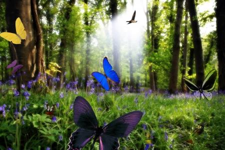 forrest: een bos vol van blauwe hyacinten