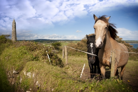 two Irish horses and ancient round tower in the beautiful Ardmore countryside of county Waterford Ireland photo