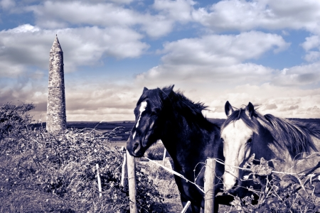 two Irish horses and ancient round tower in the beautiful Ardmore countryside of county Waterford Ireland duotone Stock Photo - 20230418