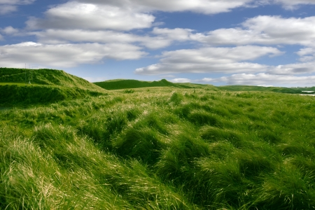 ballybunion: tall green grass on the dunes of Ballybunion golf course in county Kerry, Ireland