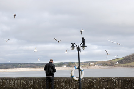 youghal: big crow perched on top of a double streetlight in Youghal county Cork Ireland