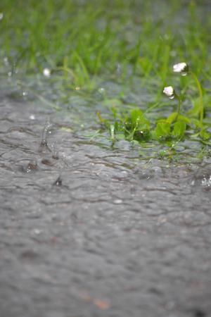 torrential: torrential rain splashing on the grass