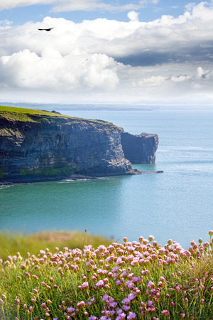 rocky jagged coastline and cliffs with flowers in county kerry ireland on the wild atlantic way