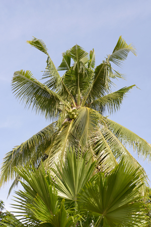 palm trees in the Philippine island of mindoro Stok Fotoğraf