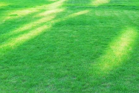 wimbledon: clean lawn Stock Photo