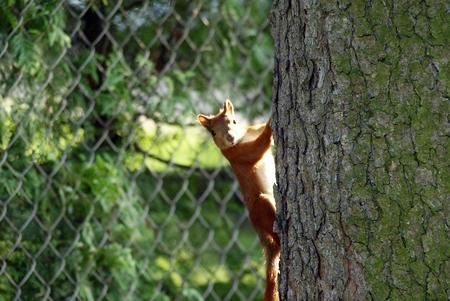 inhabits: squirrel Stock Photo