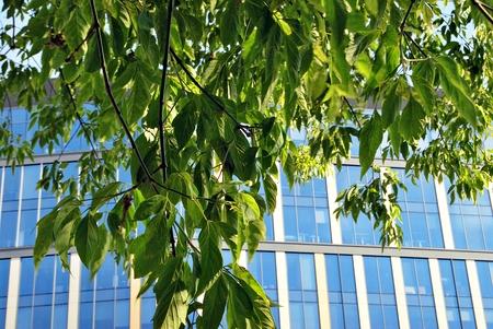 緑の葉を持つ近代的なオフィスビル