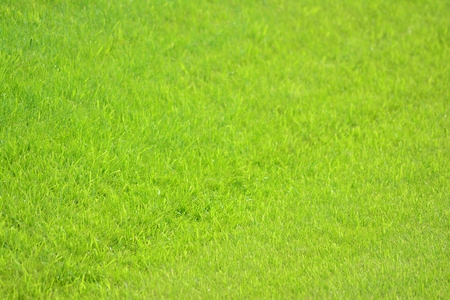 green grass of soccer top view or green artificial grass background
