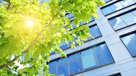 Eco building in modern city concept. Modern office building with the fresh green leaves.