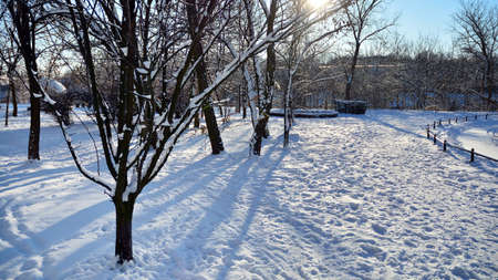 Winter landscape, Winter trees covered with snow. Beautiful winter park with sunrise colors sky and trees Foto de archivo