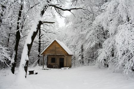 snowy forest scene photo