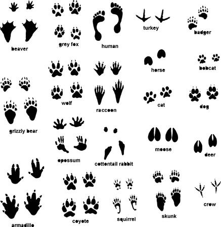 huellas de pies: Varias pistas de animales Vectores