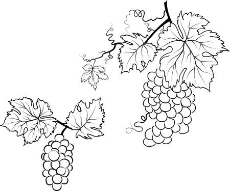 Illustratie van druiven en bladeren Stock Illustratie