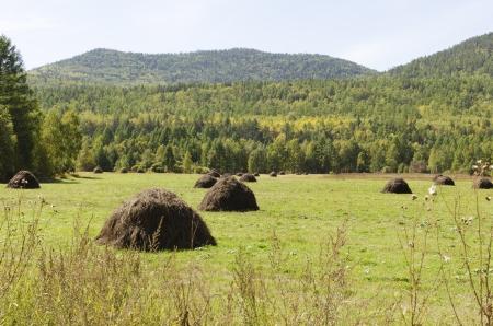 hay field: Fare il fieno Campo con covoni di fieno