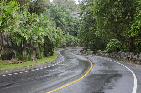 tropics: Wet asphalt road in the tropics