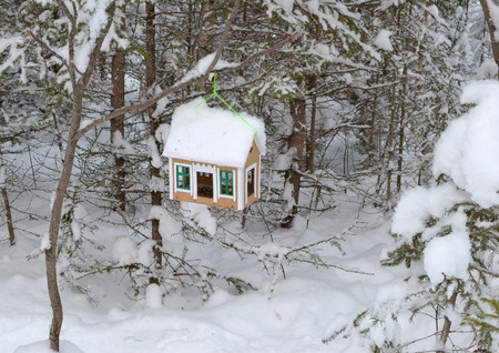 feeders: Bird feeders in the form of the house in the winter forest