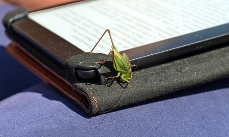 chorthippus: Chorthippus - green grasshopper closeup on e-book screen