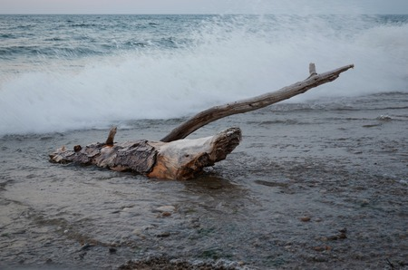 washed out: Dry driftwood out of water washed by the waves. Lake Baikal, Sukhaya-Dry bay. Long exposure