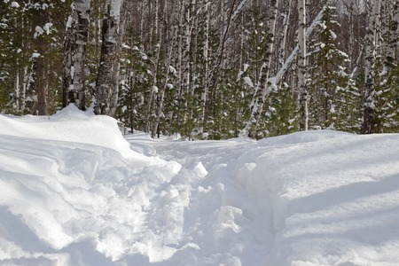 ski runs: Ski trail in fluffi snowy winter forest